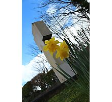 Death and Daffodils Photographic Print