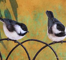 chickadees on old fence by R Christopher  Vest