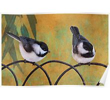 chickadees on old fence Poster