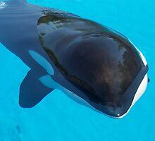 Killer Whale by CadburyKeepsake