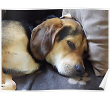 Hound Dog on the Sofa Poster