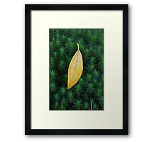 Leaf with Moss Framed Print