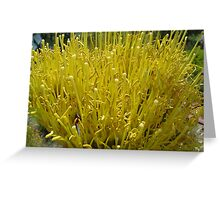French Fry Flowers Greeting Card