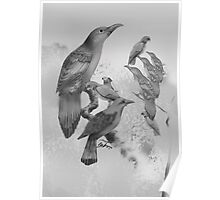 Sweet Li'l Aussie Birds (black and white) Poster