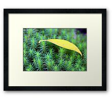 Leaf on Moss Framed Print