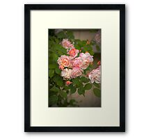 Pink Roses in HDR Framed Print