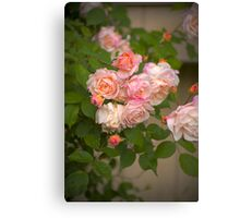 Pink Roses in HDR Canvas Print