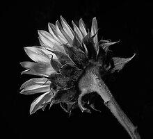 Sun Touch by Jeffrey  Sinnock