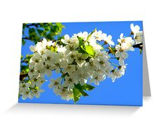 Cherry Orchard Blossoms Greeting Card