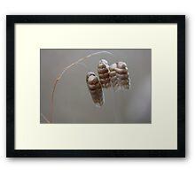 Grass seeds. Framed Print