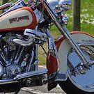 Harley by Rick Dunstan