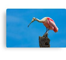 Roseate Spoonbill on Tree Trunk Canvas Print
