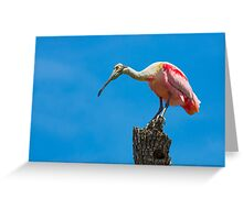Roseate Spoonbill on Tree Trunk Greeting Card