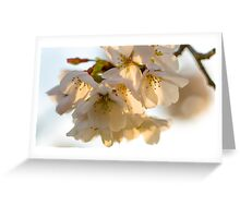 Cherry Blossoms Closeup Greeting Card