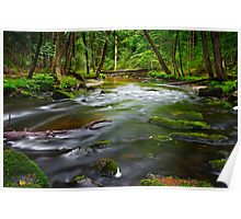 Wide Trout Stream Poster