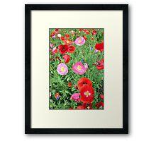 Poppies 512 Framed Print