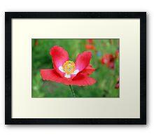 Red Poppy 512 Framed Print