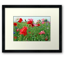 Poppy Field 512A Framed Print