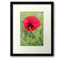 Dark Side of Poppy 215 Framed Print
