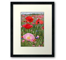 Poppy Riot 2  512 Framed Print