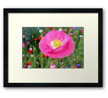 Pink Poppy 512C Framed Print