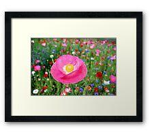 Poppy Riot 3 512 Framed Print