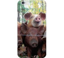 Hungry Piglets iPhone Case/Skin