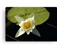 Waterlily Canvas Print