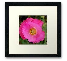 Pink Pinwheel Poppy 512 Framed Print