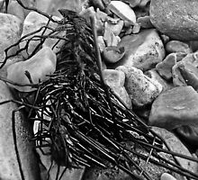 Skeletal Root -Jurassic Coast by Mark Haynes Photography