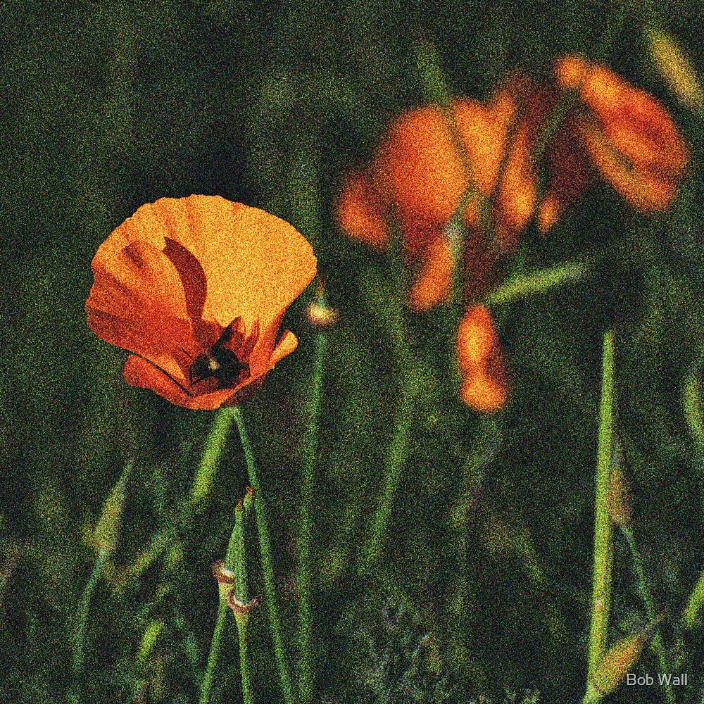 Altered Poppy by Bob Wall