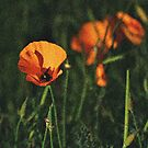 Altered Poppy by Bob Wall
