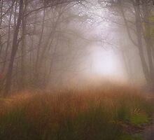 Trees Mist 1 by maratshdey