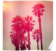 Pink Palm Trees Poster