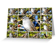 A COLLAGE OF THE NORTHERN MOCKINGBIRD IN A BOTTLEBRUSH BUSH Greeting Card