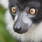 Black-and-white ruffed lemur by Lindie
