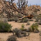 Life in the Desert by Lucinda Walter