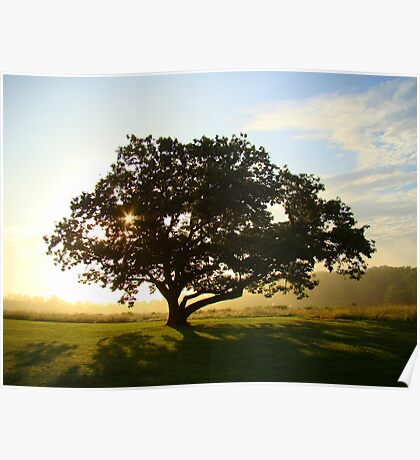 Sunrise Tree 2 Poster