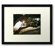 Sunrise at Foggy Branch Framed Print