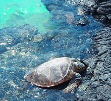 Big Island Hawaii turtle bright blue water print by artisticattitud