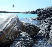Lazy turtle on Hawaii beach by artisticattitud