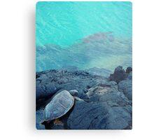 Land and ocean Hawaii turtles Metal Print