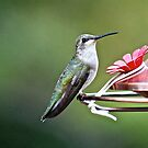 Rufous Hummingbird by Ian Berry