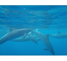 Underwater scenic Hawaii dolphin print Photographic Print