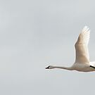 Flying Solo by jules572
