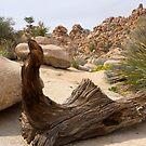 Desert Art by Lucinda Walter