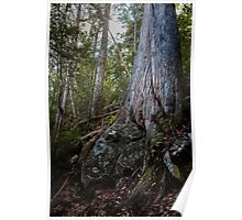 Rock and Tree, Tasmania Poster