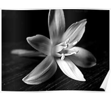 STAR OF BETHLEHEM (BLACK AND WHITE) Poster