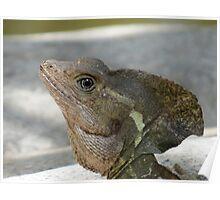 saurian portrait - retrato de lagarto Poster