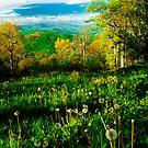 Dandy View O' Yon Mountains by Miles Moody